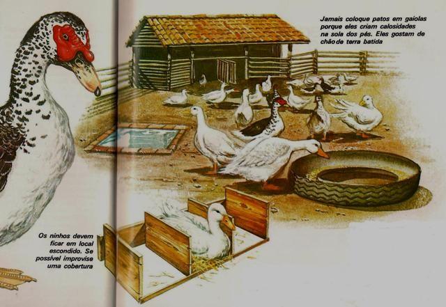 Ilustração de uma instalação de criação de patos