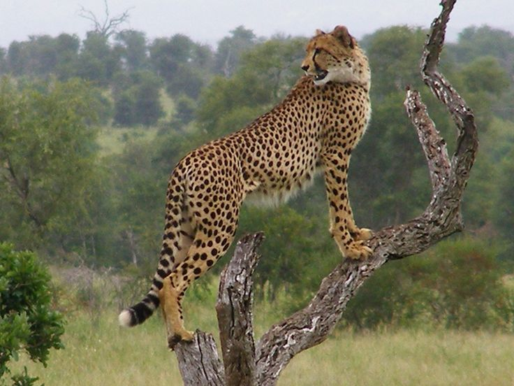 http://greatadventure24.com/top-places-for-south-africa-adventure-holidays/
