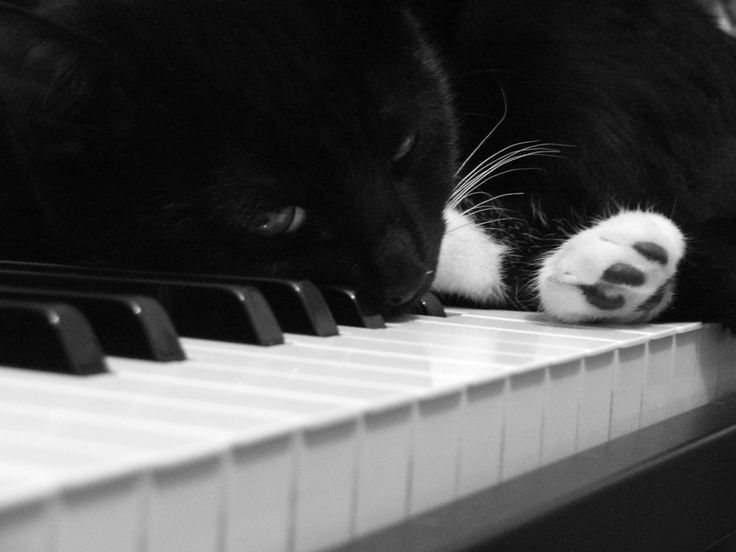 Cats Wallpapers Cats on A Piano