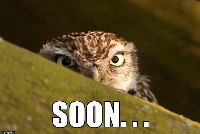 30 Funny Soon Meme Pics: Funny Owl Pictures With Captions