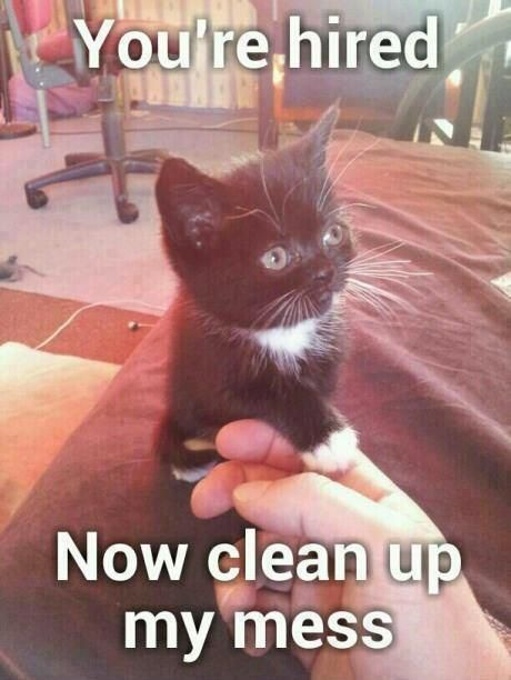 clean funny animal pictures - photo #43