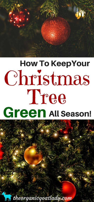 75470 Best Hometalk Christmas Images On Pinterest