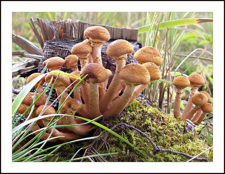 картинки семейка грибов тортики декорируются фигурками