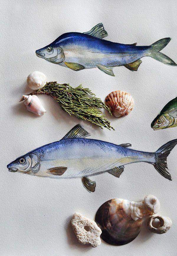 """Иллюстрации для рыб интернет-магазине """"Четверг"""" на Behance"""