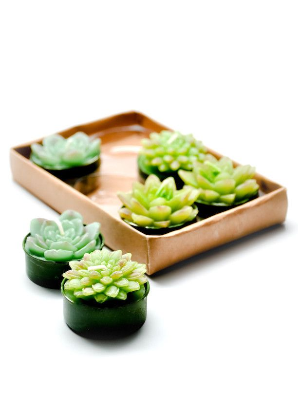 Succulents in little tea light holders (this is actually a site to buy tea lights shaped as succulents, but I like the idea for real succulents). Want to make centerpiece of lots of these surrounding apothecary jar succulent terrarium