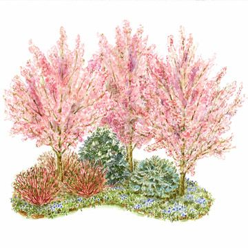 A great blooming garden doesn't need to focus on annual and perennial flowers. Here, shrubs and small trees create four seasons of color and texture. Garden size: 13 by 11 feet.