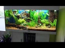 Bildresultat för juwel aquarium layout