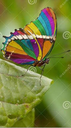 Rainbow Butterfly / thumbs.dreamstime.com