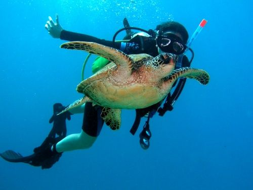 Airlie Beach is a fantastic destination in Tropical North Queensland. Enjoy snorkelling and diving with Turtles in the Great Barrier Reef #ILoveTravel