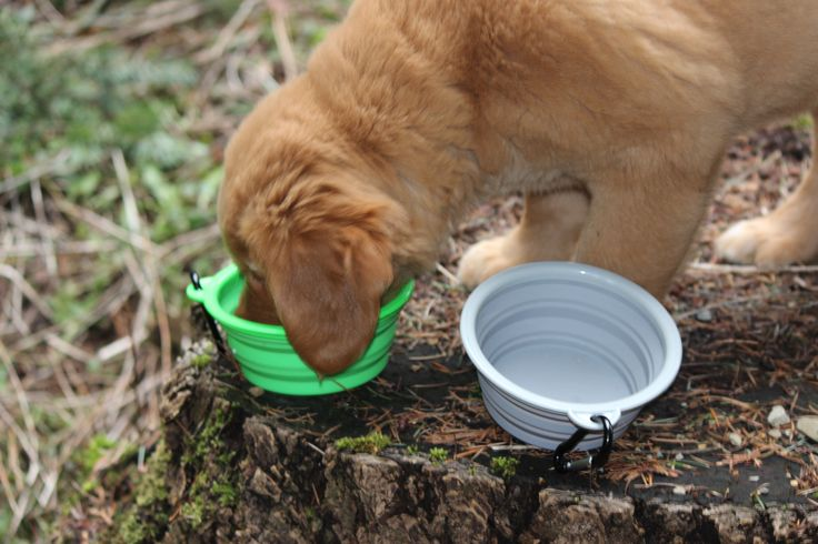 Northern Outback best travel pet bowls bpa free silicone folding dog and cat bowl