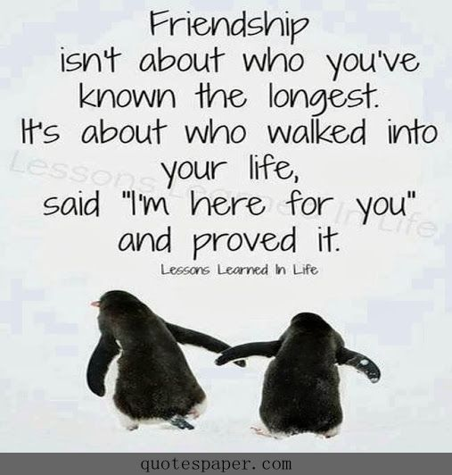 What friendship is about | Quotes About Life