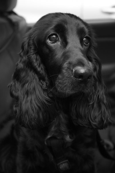 BW, simple...like it. Need to get Echo to pose better. And I need a black lab. ;)