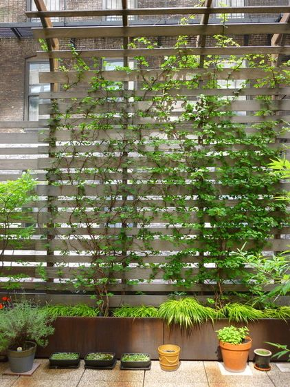 Climbing hydrangeas and ivy weave through the trellis, adding shade, privacy and textural contrasts. Potted plants allow flexibility and design maneuverability.  Water drains between each concrete paver through a raised pedestal system.