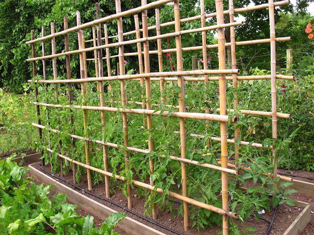 Tutores de ca a cuadrillo en el jardin la huerta en for La bioguia jardines