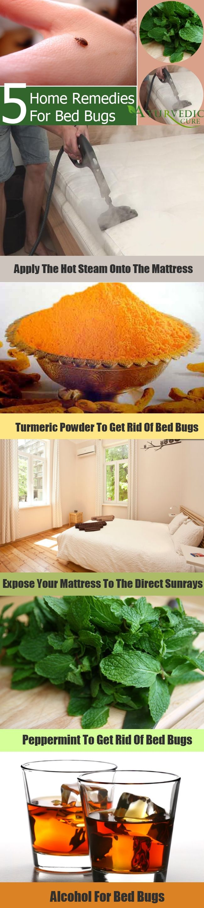 Wants To Get Rid Of Bed Bugs...??