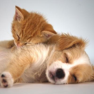 Hond en kat - liefde (Met deze kaart steun je Proefdiervrij.)