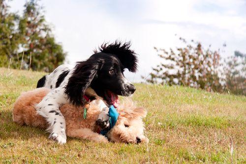 Influenza canina: Causas, síntomas y tratamiento