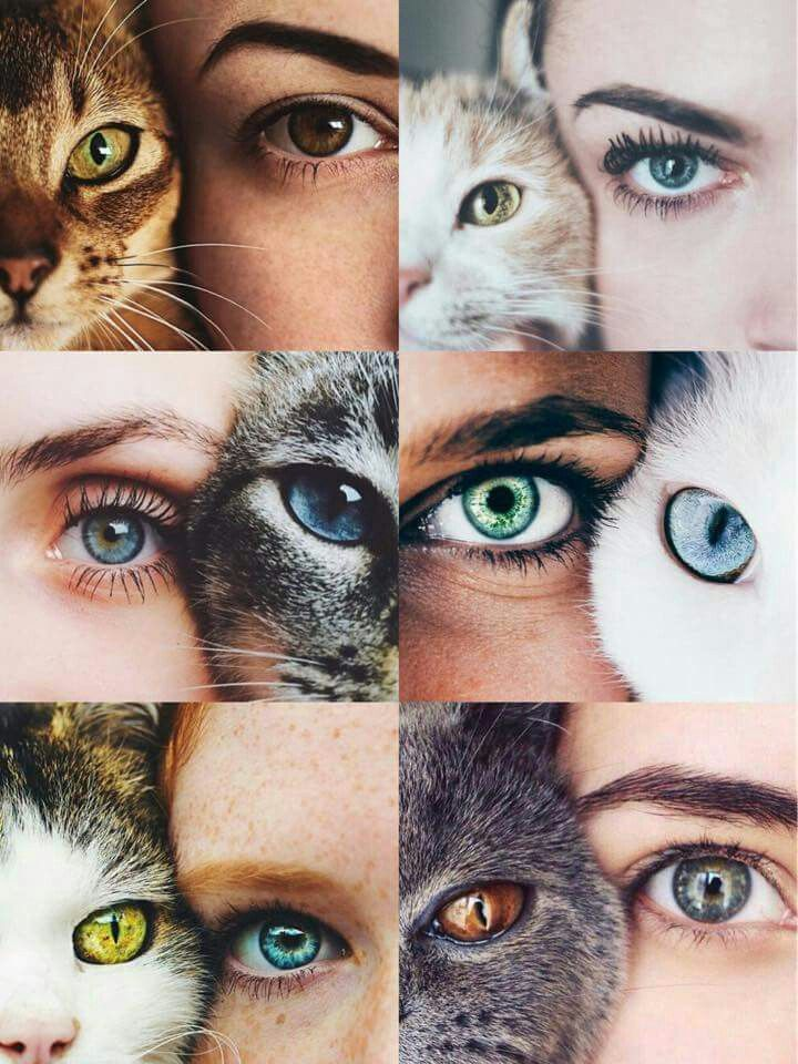 Picture with your cat. Or dog #of #dogoutfitideas #cat – cool
