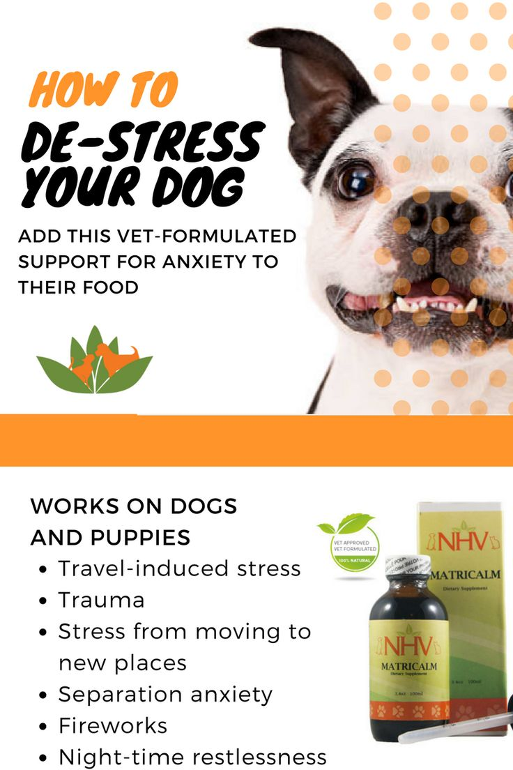Canine herbal therapy - Best 25 Dog Anxiety Ideas On Pinterest Benedryl For Dogs Twitter Storm And Over Dose