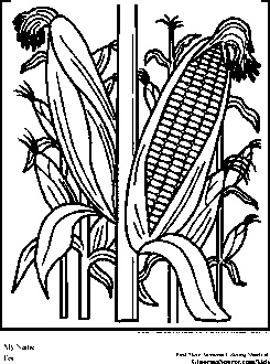 Farm Coloring Pages Cornfield Corn StalksHomemade
