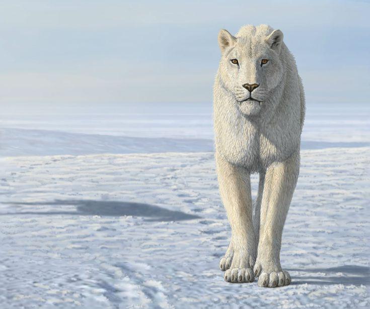 Forskere troede tidligere, at <i>Arctic homotherium</i> gik ligesom en bjørn, der bruger hele poten, men Mauricio Anton fandt i sine undersøgelser af fossiler ud af, at det var forkert. Sabeltigeren gik kun som en bjørn under jagt, for at stå mere stabilt, men ellers gik den som en normal tiger. (Billede: Mauricio Anton)