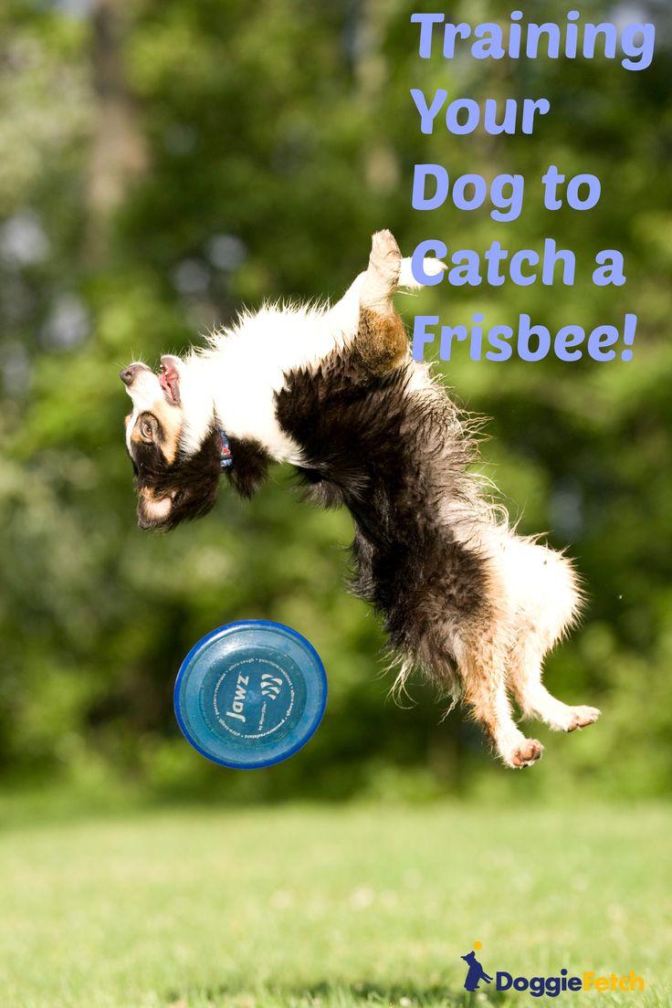 34abd94e50fef98c81b22fc9b059cba4 39 best frisbee dog images on pinterest border collies, doggies