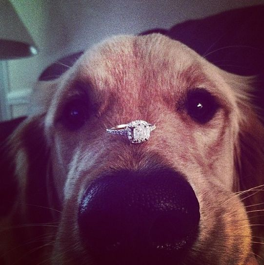 Proposal Ideas Using Pets: 16 Best Creative Ways To Propose Images On Pinterest
