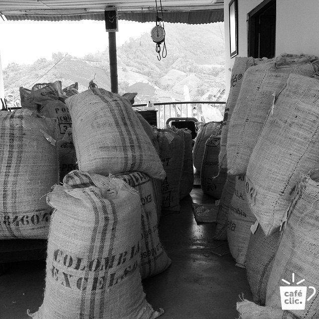 """Se decía que los altos de Manizales no podían producir café. Los caficultores se afanaban en todas direcciones, pero los rendimientos eran malos y el suelo era frío. Entonces un día el sabio Tío Conejo dijo """"No Más!"""". Trabajando día y noche para sembrar sus granos mágicos de café, llenó las laderas de Manizales con vida, belleza y calor. La leyenda del Tío Conejo te trae una taza de perfección llena de sabores a moras, anís, miel y mantequilla... Aprende más de Tío Conejo en www.cafeclic.com"""