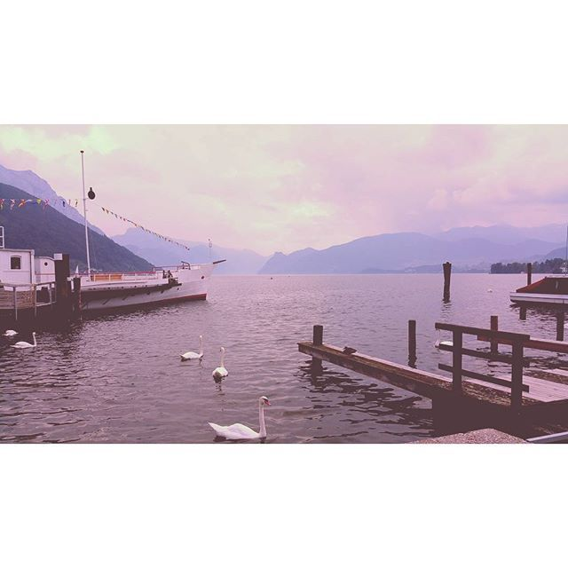 #traunsee #gmunden #iloveaustria #oesterreich #beautiful #swan #see #igersvienna #igersaustria #thisismyeurope