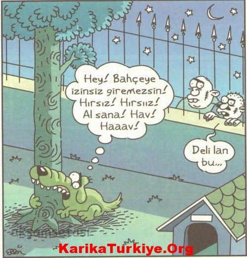 Köpek Cinsleri, Köpek Irkları, Köpek Türleri Nelerdir » KarikaTürkiye.Org