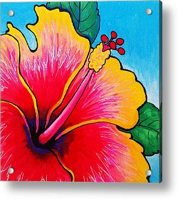 Hibiscus 01 Acrylic Print by Adam Johnson