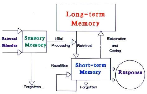 Information Processing Theory is a family of theoretical perspectives that address how human beings mentally acquire, interpret and remember information and how such cognitive processes change over the course of development.