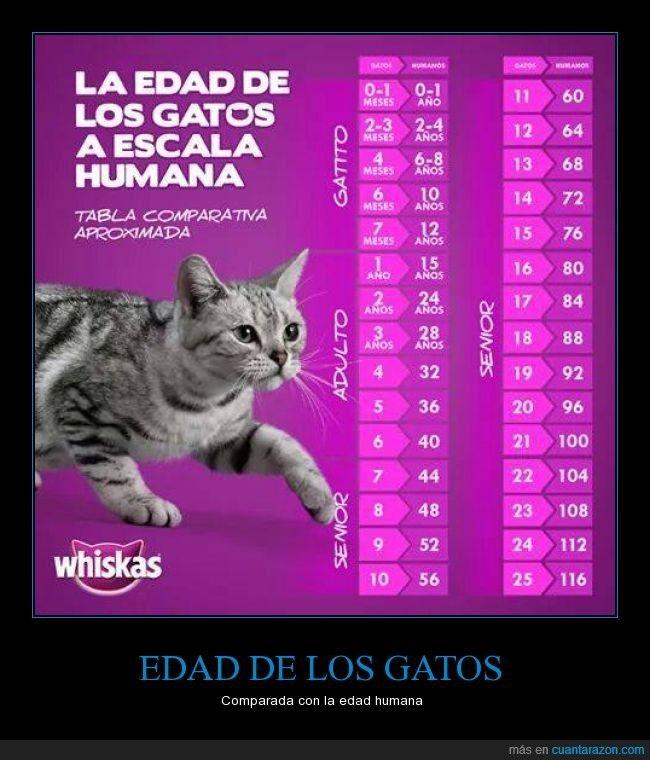 La edad de los gatos a escala humana...Whiskas