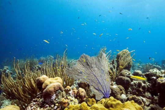 Scuba Diving Turks And Caicos Diving Diving Dive Resort
