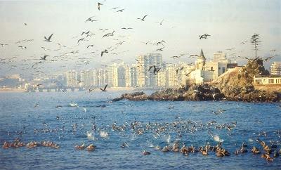 Playa Viña del Mar, Playas de Chile