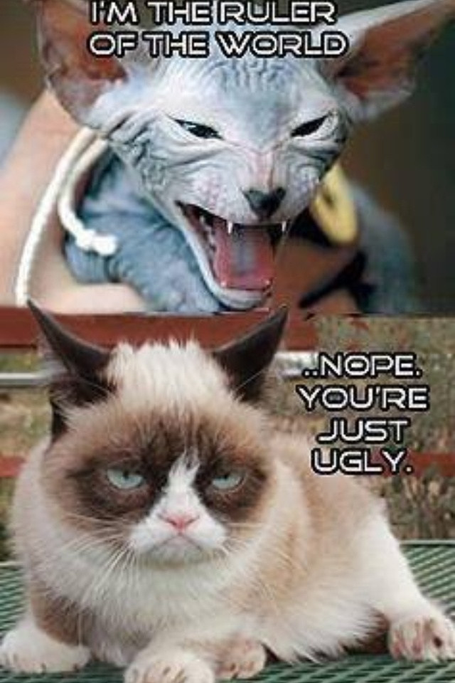 Pregnant Cat Meme Quotes