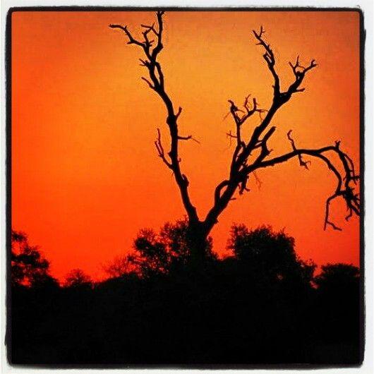 Sunset Kruger Park South Africa