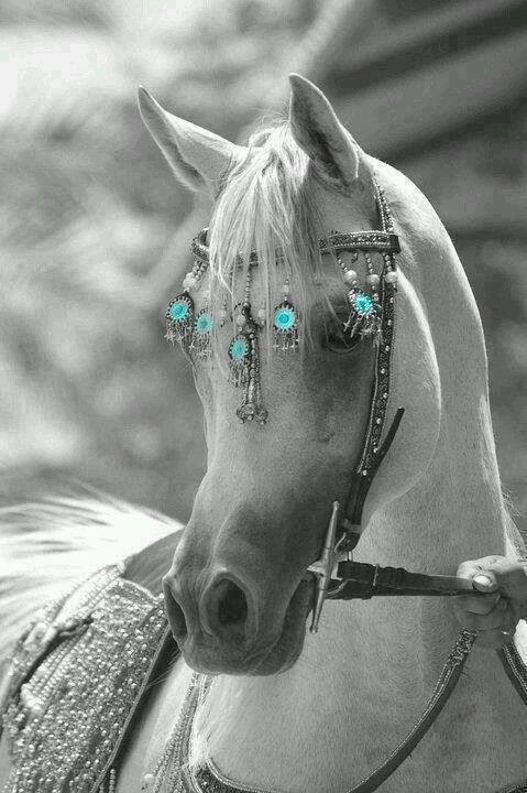 Turquoise - both Native Americans and Mongols used Turquoise on their horse equipment. It was thought to protect against getting thrown and still is used as a travelers stone.
