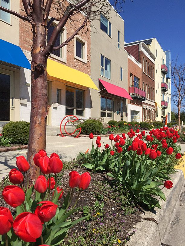 Tulips at Jackson Place | photo by Yvette Kuhlman