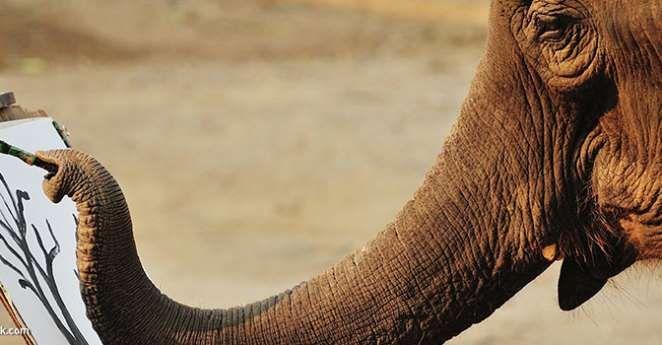 Elefantes-pintores-T