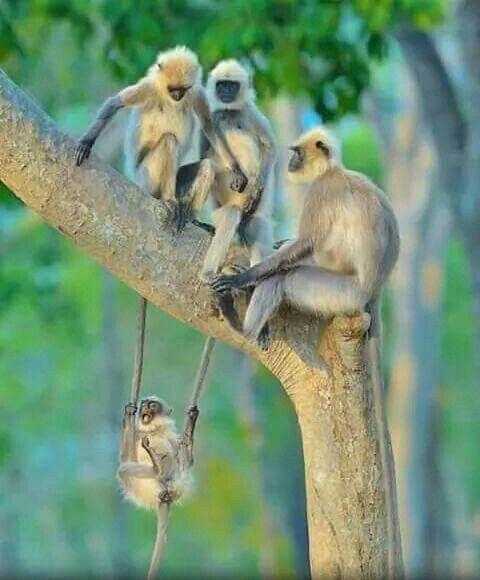 nunavut animals wildlife