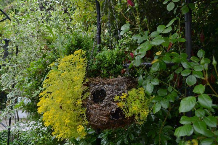 http://www.facebook.com/media/set/?set=a.522562987832740.1073741883.174136919342017&type=3   Сад в доме престарелых в Королевском округе Кенсингтон и Челси, Лондон. Источник: http://featherygold.livejournal.com/