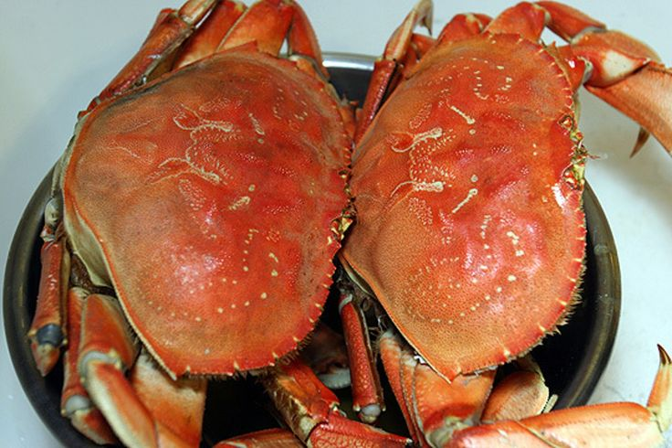 How To: Cook And Clean Dungeness Crab