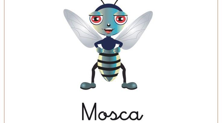 Mejores 23 imágenes de insect en Pinterest | Insectos, Animales ...