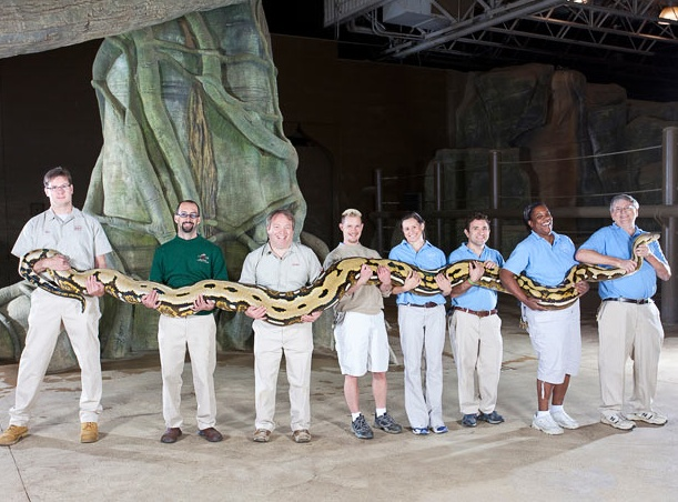 A 24-ft (7.3-m) reticulated python called Fluffy longest living snake