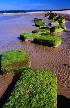 Findhorn beach, Scotland  Blocks of moss on Findhorn beach in the Scottish Highlands.