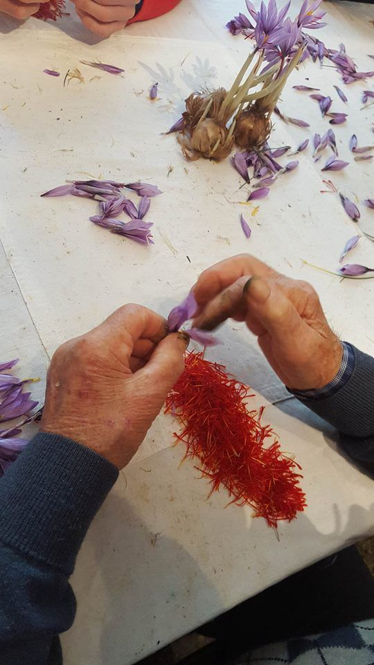 Expert and old hands remove the red gold of Abruzzo. Ecco la fase di sfioratura da mani esperte #Abruzzo #travel #italy #navelli #abruzzosegreto #zafferano #saffron #zafferanodellaquiladop