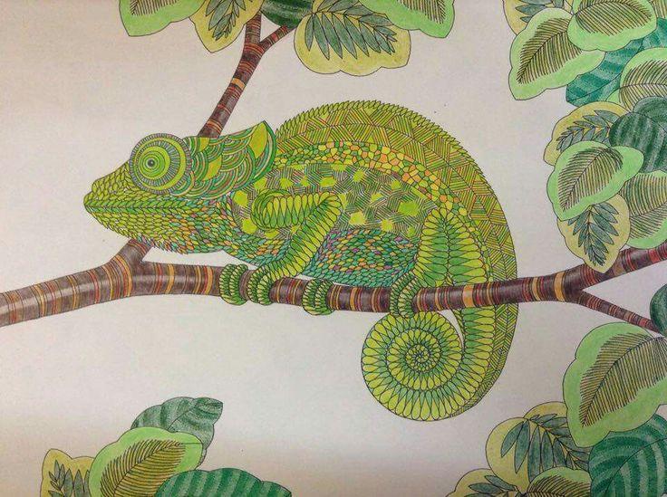 Millie Marotta Adult ColoringColoring PagesColoring BooksAnimal KingdomJoanna BasfordNursery