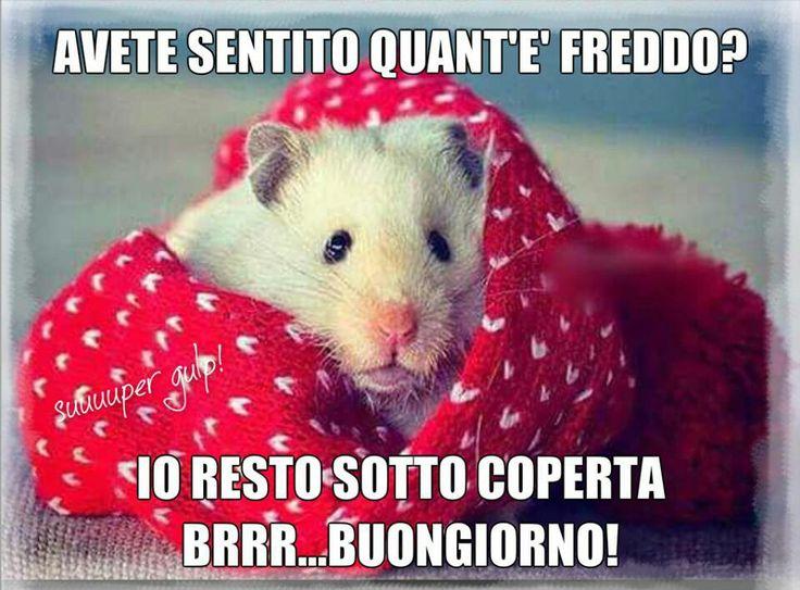 Buon giorno - when it's cold, stay below deck! Brr.