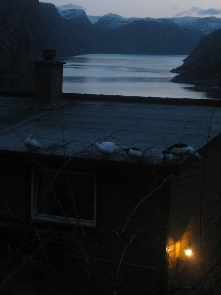 Five of our muscovy ducks have found a new place to spend their nights - on grandmother and grandfather's roof!! December 26th 2015.